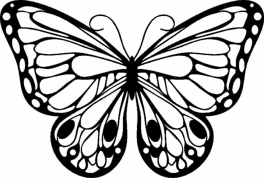 Butterflt Coloring Page